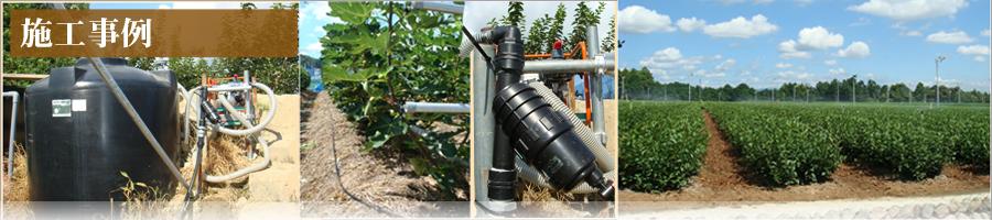 いちじく 点滴かん水設備
