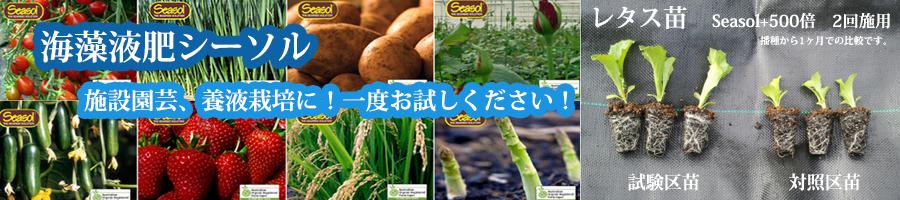 海藻液肥シーソル